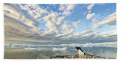 Adelie Penguin Flapping Wings Beach Sheet by Yva Momatiuk John Eastcott