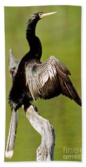Anhinga Anhinga Anhinga Drying Plumage Beach Towel by Millard H. Sharp
