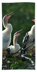 Anhinga Chicks Beach Towel by Mark Newman