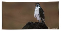Augur Buzzard Beach Sheet by Art Wolfe
