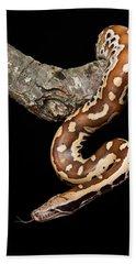 Blood Python Python Brongersmai Beach Towel by David Kenny