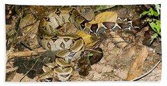 Boa Constrictor Beach Sheet by Gregory G. Dimijian, M.D.