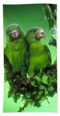 Cobalt-winged Parakeets Beach Towel by Art Wolfe