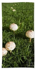 Field Of Mushrooms Beach Towel by Jorgo Photography - Wall Art Gallery