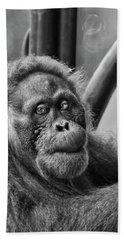 Orangutan Mama Beach Towel by Phill Doherty