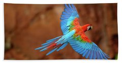 Red And Green Macaw Flying Beach Sheet by Pete Oxford