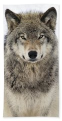 Timber Wolf Portrait Beach Towel by Tony Beck