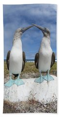 Blue-footed Booby Pair Courting Beach Sheet by Tui De Roy