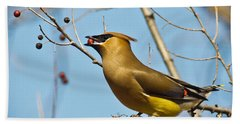 Cedar Waxwing With Berry Beach Towel by Robert Frederick