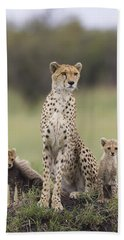 Cheetah Mother And Cubs Maasai Mara Beach Sheet by Suzi Eszterhas