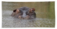 Hippopotamus Hippopotamus Amphibius Beach Towel by Panoramic Images