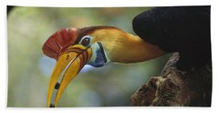 Sulawesi Red-knobbed Hornbill Male Beach Towel by Tui De Roy