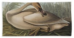 Trumpeter Swan Beach Towel by John James Audubon