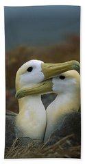Waved Albatross Pair Bonding Galapagos Beach Sheet by Tui De Roy