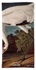 Whooping Crane Beach Towel by John James Audubon