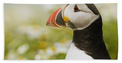 Atlantic Puffin In Breeding Plumage Beach Sheet by Sebastian Kennerknecht