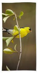 American Goldfinch Beach Towel by Christina Rollo