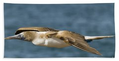 Blue-footed Booby Beach Sheet by William H. Mullins