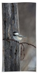 Black-capped Chickadee Poecile Beach Sheet by Linda Freshwaters Arndt