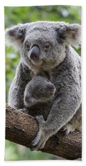 Koala Mother And Joey Australia Beach Sheet by Suzi Eszterhas