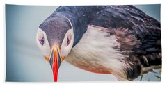 Atlantic Puffin Fratercula Arctica Beach Sheet by Panoramic Images