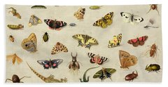 A Study Of Insects Beach Sheet by Jan Van Kessel