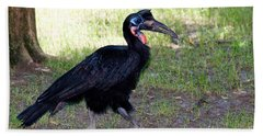 Abyssinian Ground-hornbill Beach Towel by Gregory G. Dimijian