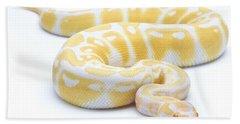 Albino Royal Python Beach Towel by Michel Gunther