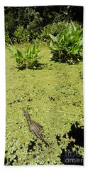 Alligator In Corkscrew Swamp, Florida Beach Sheet by Gregory G. Dimijian
