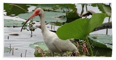 American White Ibis In Brazos Bend Beach Towel by Dan Sproul
