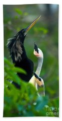 Anhinga Adult With Chicks Beach Sheet by Mark Newman