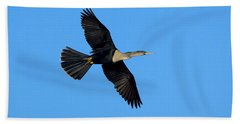 Anhinga Female Flying Beach Towel by Anthony Mercieca