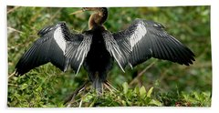 Anhinga Sunning Beach Towel by Anthony Mercieca