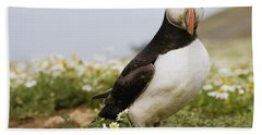 Atlantic Puffin In Breeding Plumage Beach Sheet by Sebastian Kennerknecht