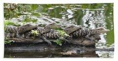 Baby Alligators Beach Sheet by Dan Sproul