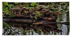 Baby Alligators Reflection Beach Sheet by Dan Sproul