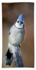 Backyard Birds Blue Jay Beach Sheet by Bill Wakeley