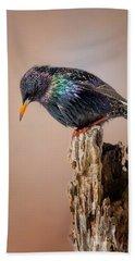 Backyard Birds European Starling Beach Sheet by Bill Wakeley