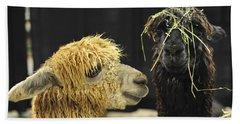 Bad Hair Day Farm Show Harrisburg Pa Beach Towel by Terry DeLuco
