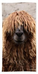Bad Hair Day Beach Sheet by James Brunker