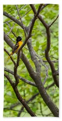 Baltimore Oriole Beach Towel by Bill Wakeley