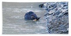 Beaver Chews On Stick Beach Towel by Chris Flees