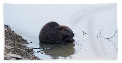Beaver In The Shallows Beach Sheet by Chris Flees