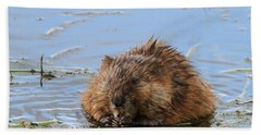 Beaver Portrait Beach Sheet by Dan Sproul