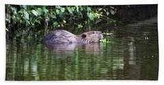 beaver swims in NC lake Beach Sheet by Chris Flees