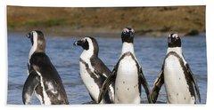 Black-footed Penguins On Beach Cape Beach Towel by Alexander Koenders