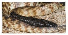 Black-headed Python Beach Towel by William H. Mullins