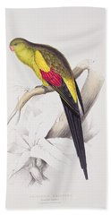 Black Tailed Parakeet Beach Towel by Edward Lear