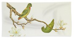 Blue Crowned Parakeet Hannging On A Magnolia Branch Beach Towel by Chinese School