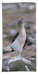 Blue-footed Booby In Courtship Dance Beach Sheet by Konrad Wothe
